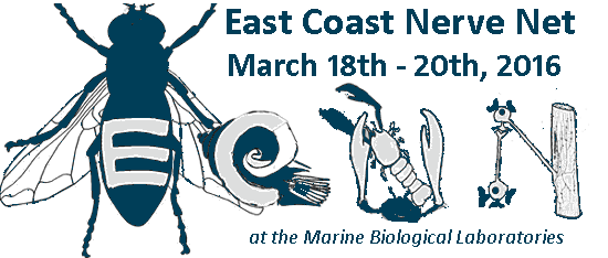 A-M Systems Attends East Coast Nerve Net at MBL